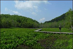 ミズバショウの咲く池ケ原湿原です